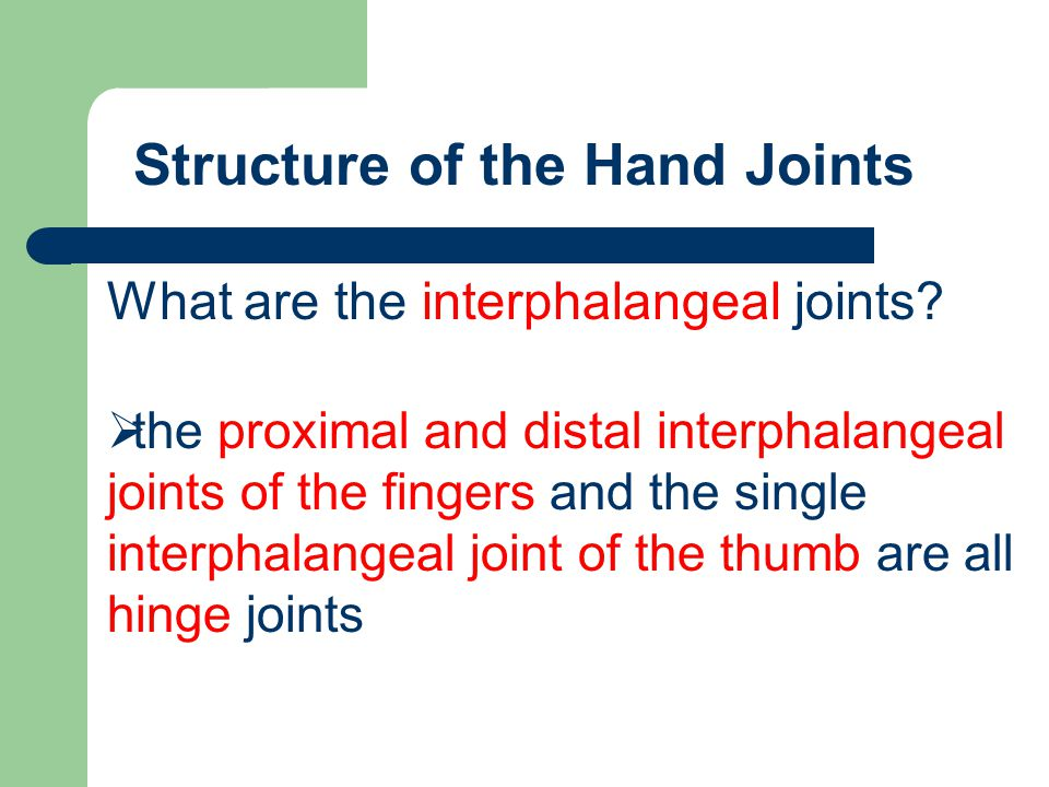 What are the interphalangeal joints?  the proximal and distal interphalangeal joints of the fingers and the single interphalangeal joint of the thumb