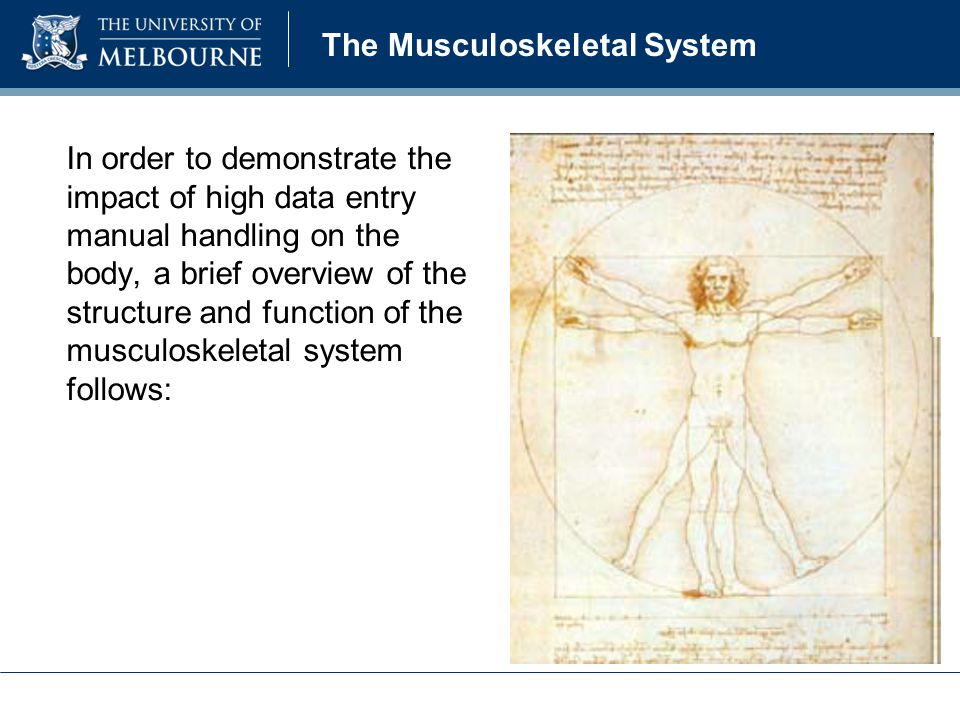 In order to demonstrate the impact of high data entry manual handling on the body, a brief overview of the structure and function of the musculoskeletal system follows: The Musculoskeletal System