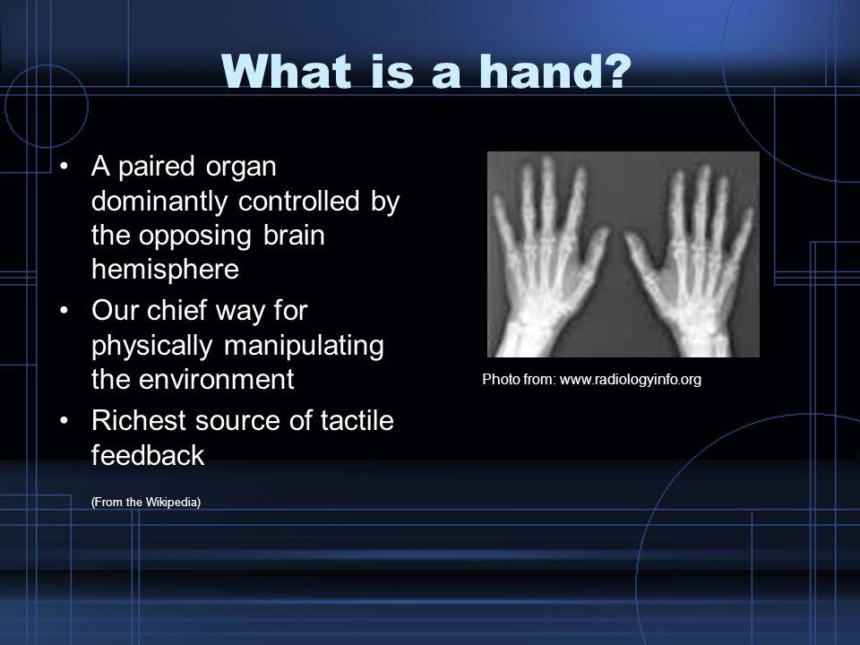 Anatomy Structures –Shoulder –Upper arm –Forearm –Wrist –Hand –Fingers
