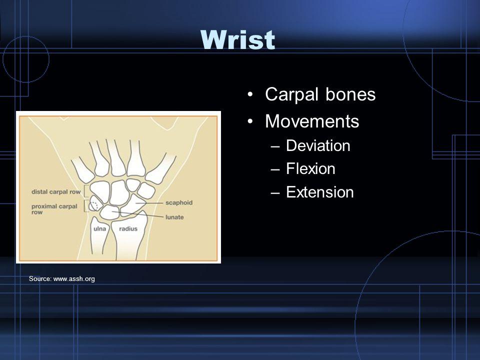Hand Metacarpals Phalanges Movements –Flex –Extend –Abduction –Adduction –Isolated movement vs.