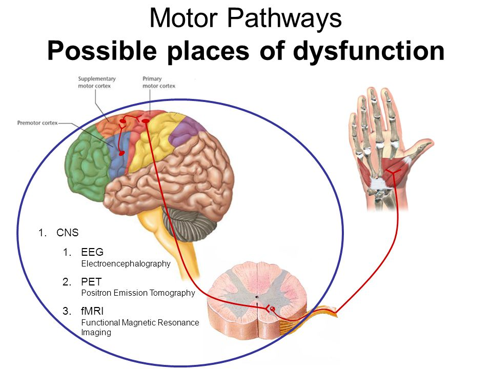 Motor Pathways Possible places of dysfunction 1.CNS 1.EEG Electroencephalography 2.PET Positron Emission Tomography 3.fMRI Functional Magnetic Resonan