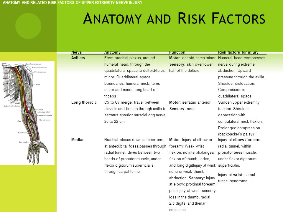 A NATOMY AND R ISK F ACTORS ANATOMY AND RELATED RISK FACTORS OF UPPER EXTREMITY NERVE INJURY NerveAnatomyFunctionRisk factors for injury Musculocutaneous C5 to C7 merge into lateral cord brachial plexus, goes through axilla, under coracobrachialis, through biceps and under deep fascia at the elbow Motor: Injury at shoulder: loss in biceps, coracobrachialis, and brachialis.