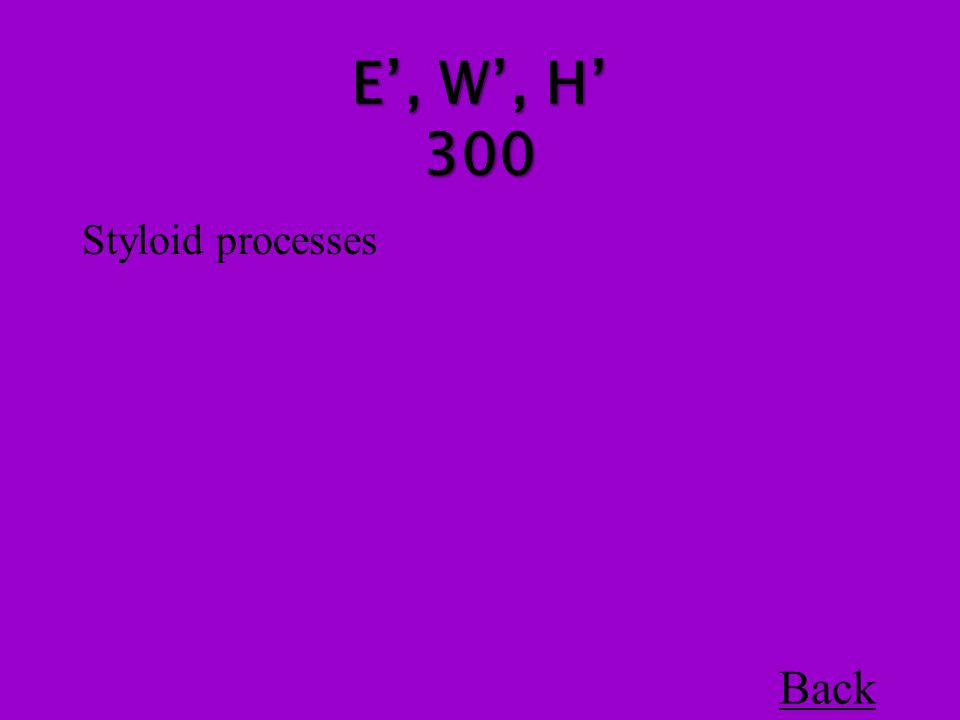 Styloid processes Back E', W', H' 300