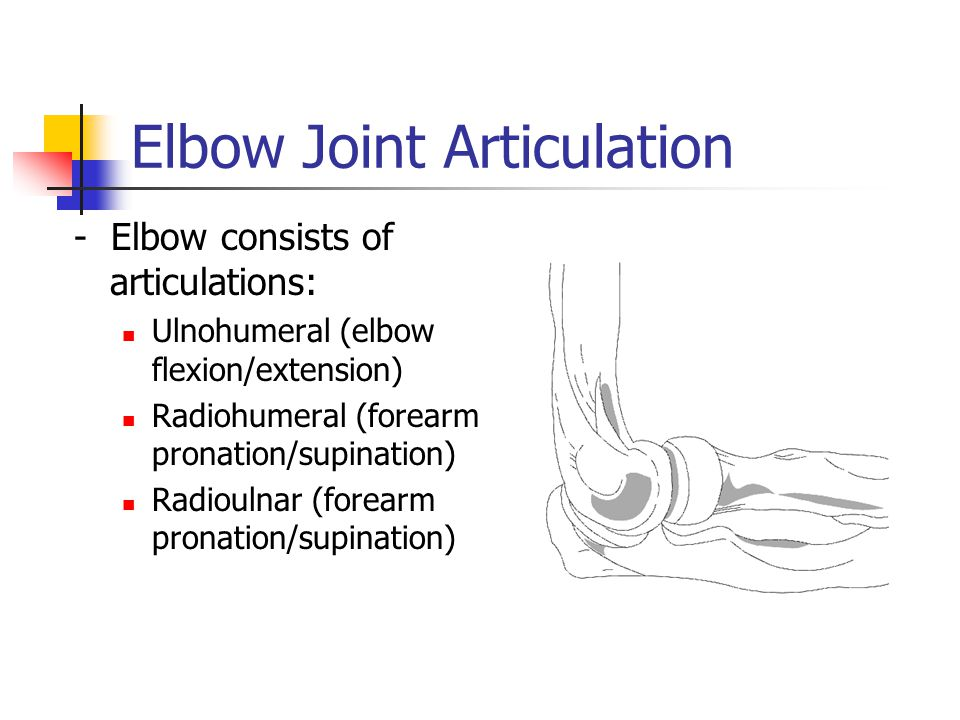 Elbow Joint Articulation - Elbow consists of articulations: Ulnohumeral (elbow flexion/extension) Radiohumeral (forearm pronation/supination) Radiouln