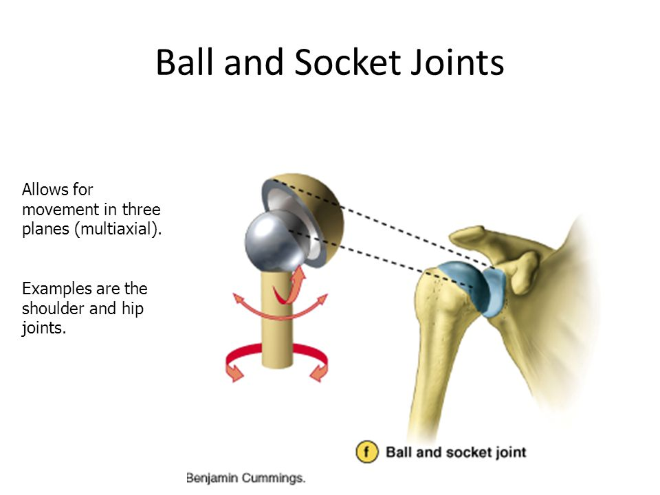Ball and Socket Joints Allows for movement in three planes (multiaxial). Examples are the shoulder and hip joints.