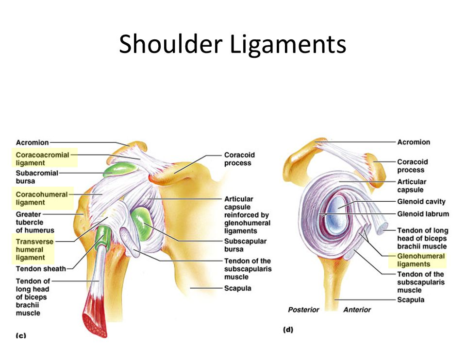 Shoulder joint, Journals and Search on Pinterest