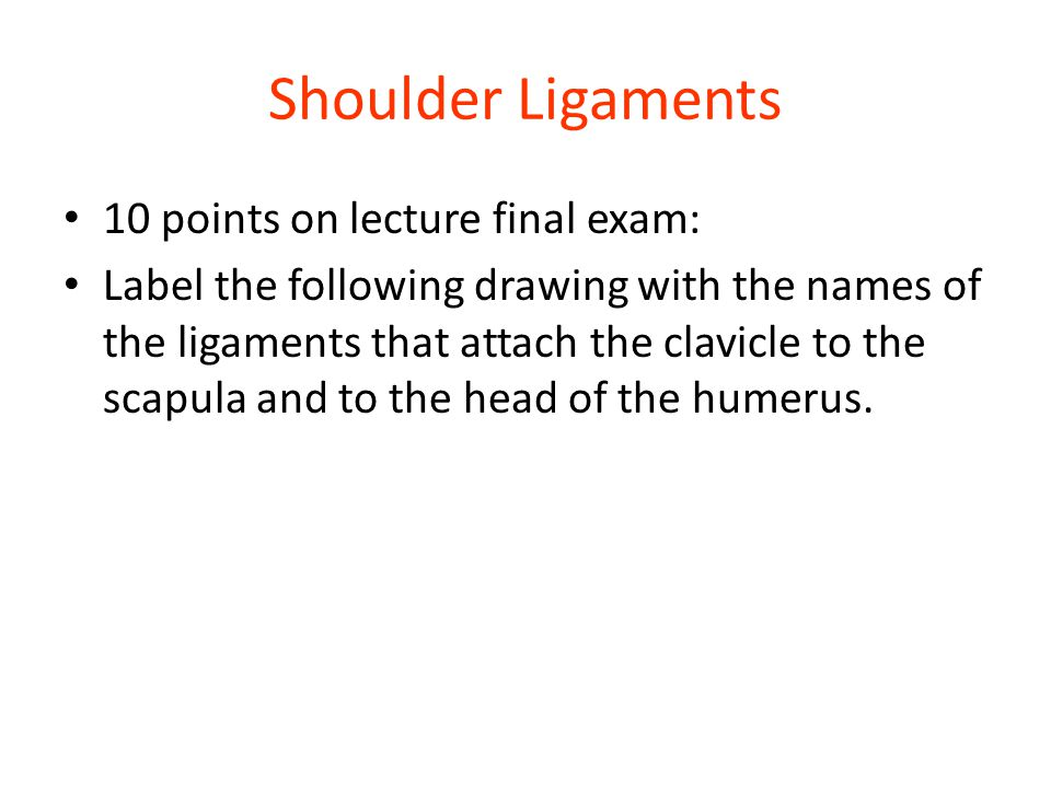 Shoulder Ligaments 10 points on lecture final exam: Label the following drawing with the names of the ligaments that attach the clavicle to the scapul