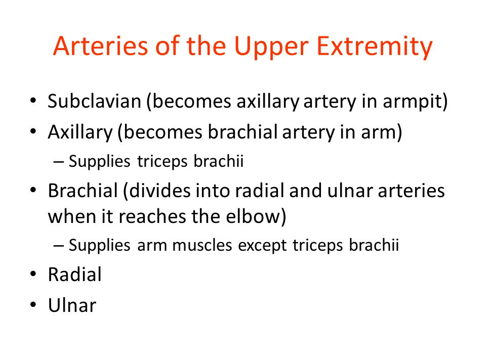Arteries of the Upper Extremity Subclavian (becomes axillary artery in armpit) Axillary (becomes brachial artery in arm) – Supplies triceps brachii Br