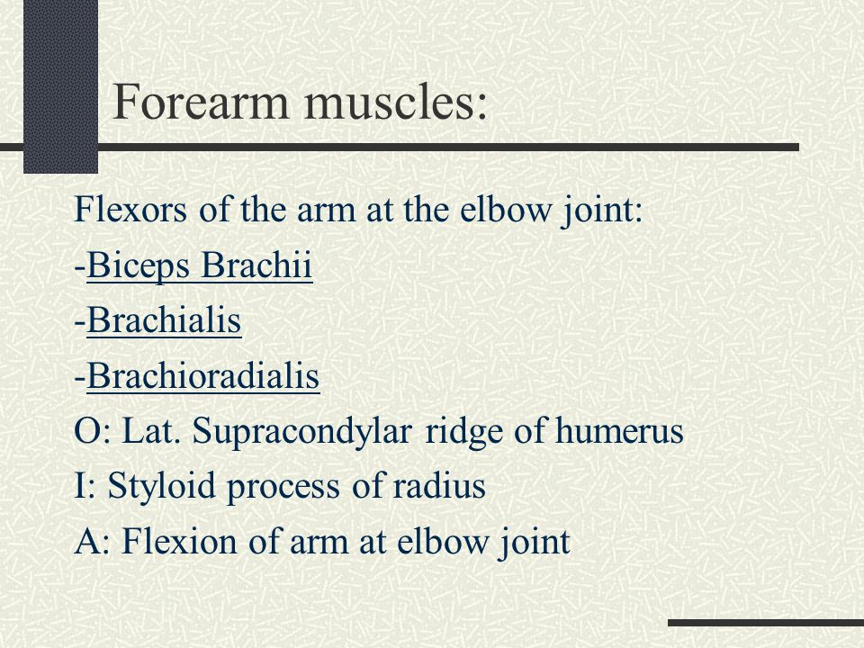 Forearm muscles Pronation of Forearm: (page 29) Pronator Teres and Pronator Quadratus Pronator Teres O: Medial epicondyle of humerus & coronoid process of ulna I: Middle of lateral shaft of radius A: Pronation of forearm