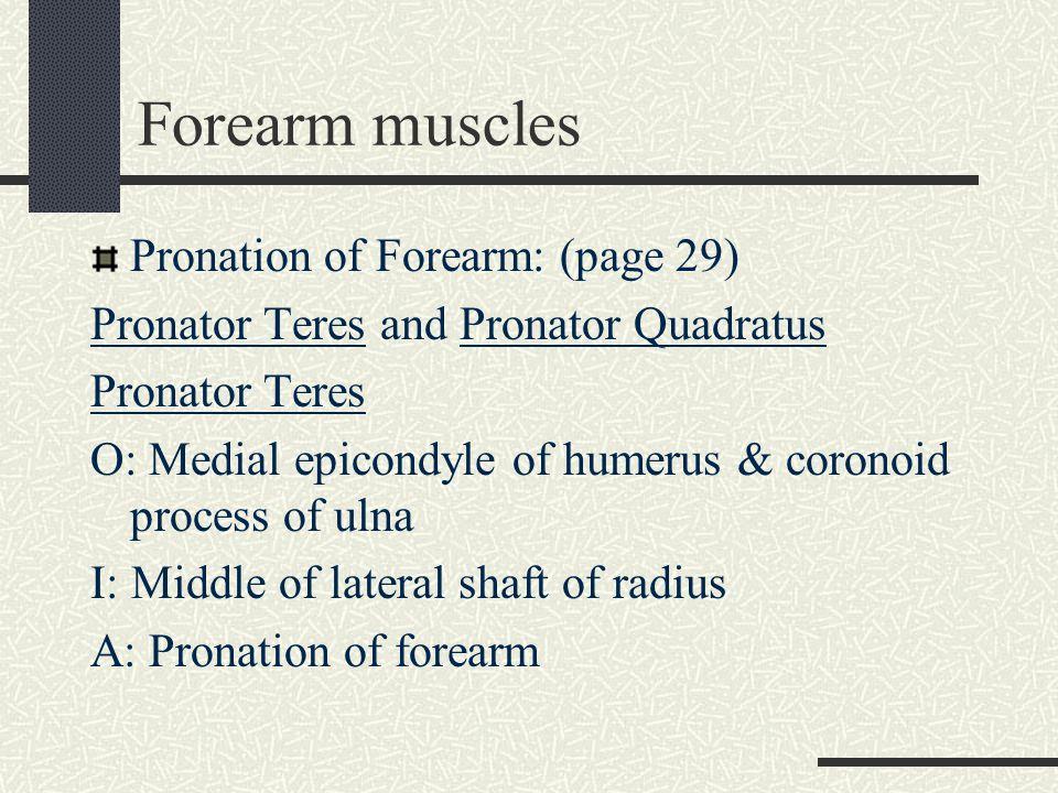 Forearm muscles: Pronator Quadratus O: Distal fourth of ant.
