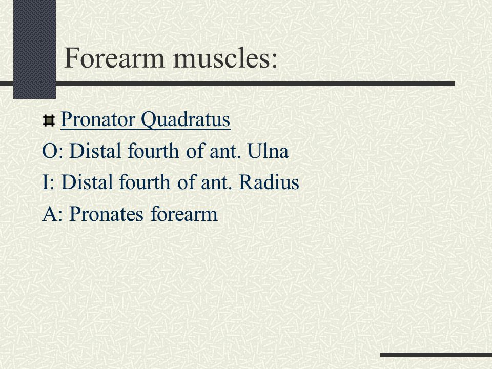 Intrinsic Thumb Muscles Flexor pollicis brevis Abductor pollicis brevis Opponens pollicis -All form the Thenar eminence- Adductor Pollicis -forms the web space of the thumb(ant.surface)