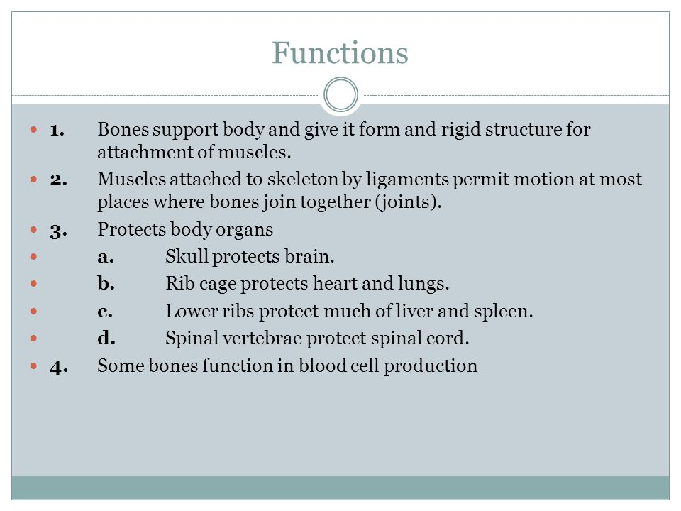 Functions 1.Bones support body and give it form and rigid structure for attachment of muscles. 2.Muscles attached to skeleton by ligaments permit moti