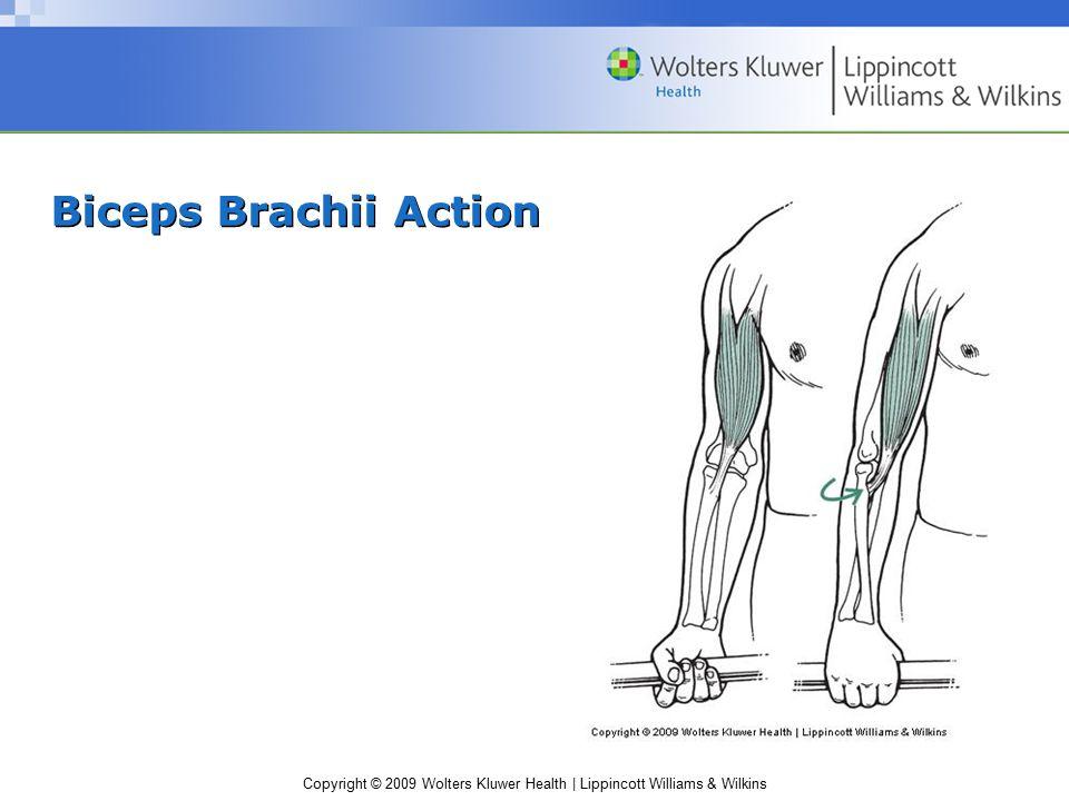 Copyright © 2009 Wolters Kluwer Health | Lippincott Williams & Wilkins Biceps Brachii Action
