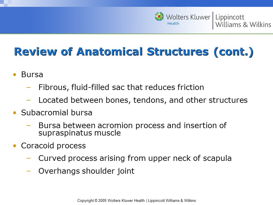 Copyright © 2009 Wolters Kluwer Health | Lippincott Williams & Wilkins Review of Anatomical Structures (cont.) Bursa –Fibrous, fluid-filled sac that r
