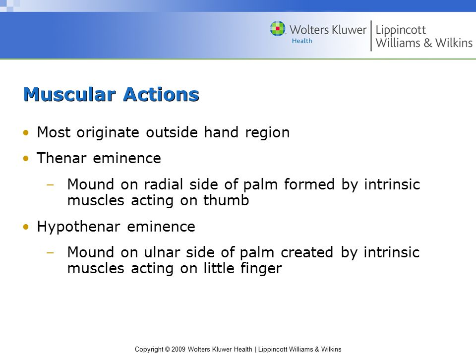 Copyright © 2009 Wolters Kluwer Health | Lippincott Williams & Wilkins Muscular Actions Most originate outside hand region Thenar eminence –Mound on r