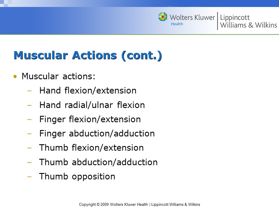 Copyright © 2009 Wolters Kluwer Health | Lippincott Williams & Wilkins Muscular Actions (cont.) Muscular actions: –Hand flexion/extension –Hand radial