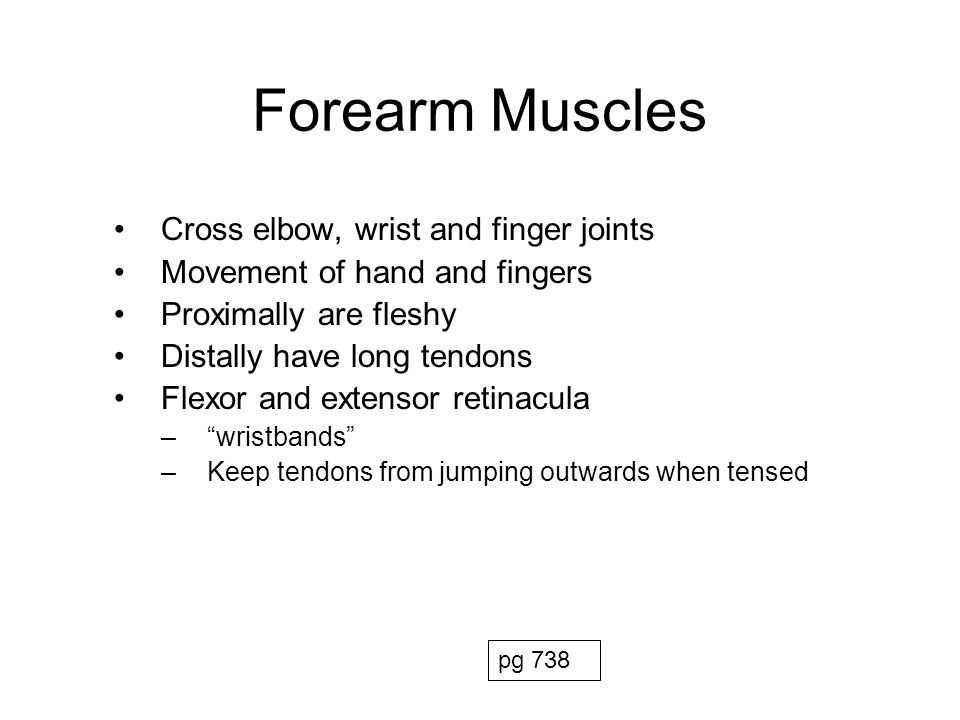 Forearm Muscles Anterior compartment –Superficial and Deep layers –Flexors of hand and fingers –Most flexors have common origin on medial epicondyle –Contains 2 pronator muscles Posterior compartment –Superficial and Deep layers –Extensors of hand and fingers –Most extensors have common origin on lateral epicondyle –Contains a supinator muscle pg 732