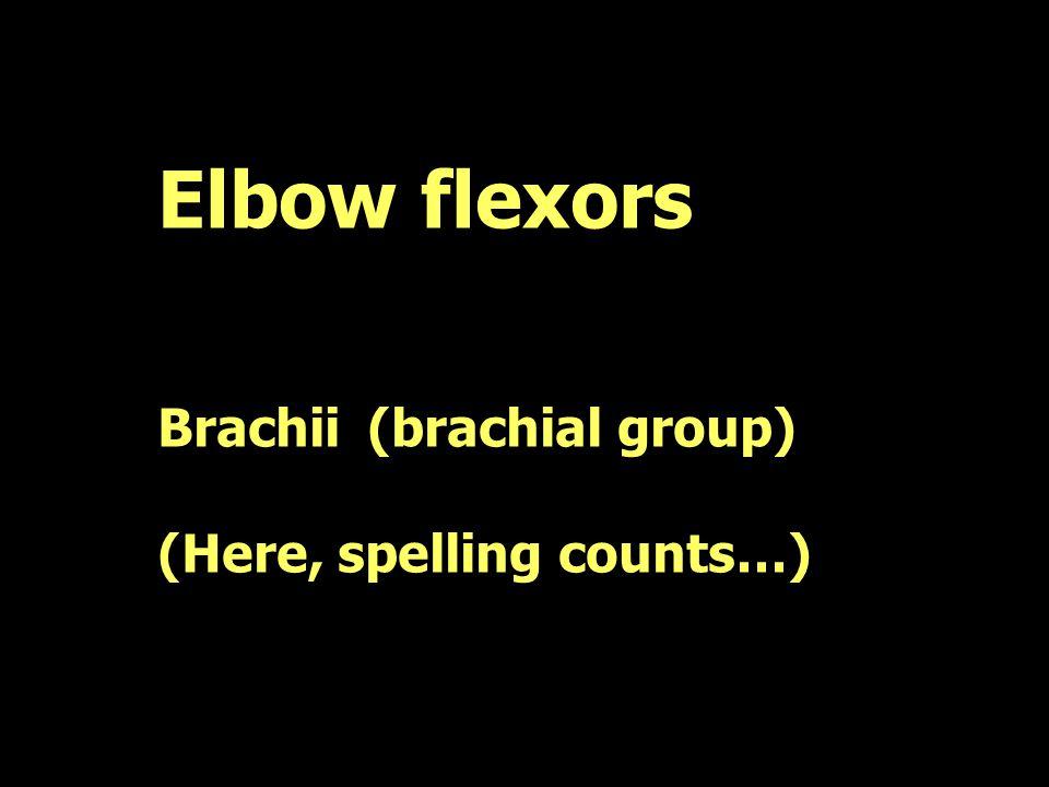 Elbow flexors Brachii(brachial group) (Here, spelling counts…)