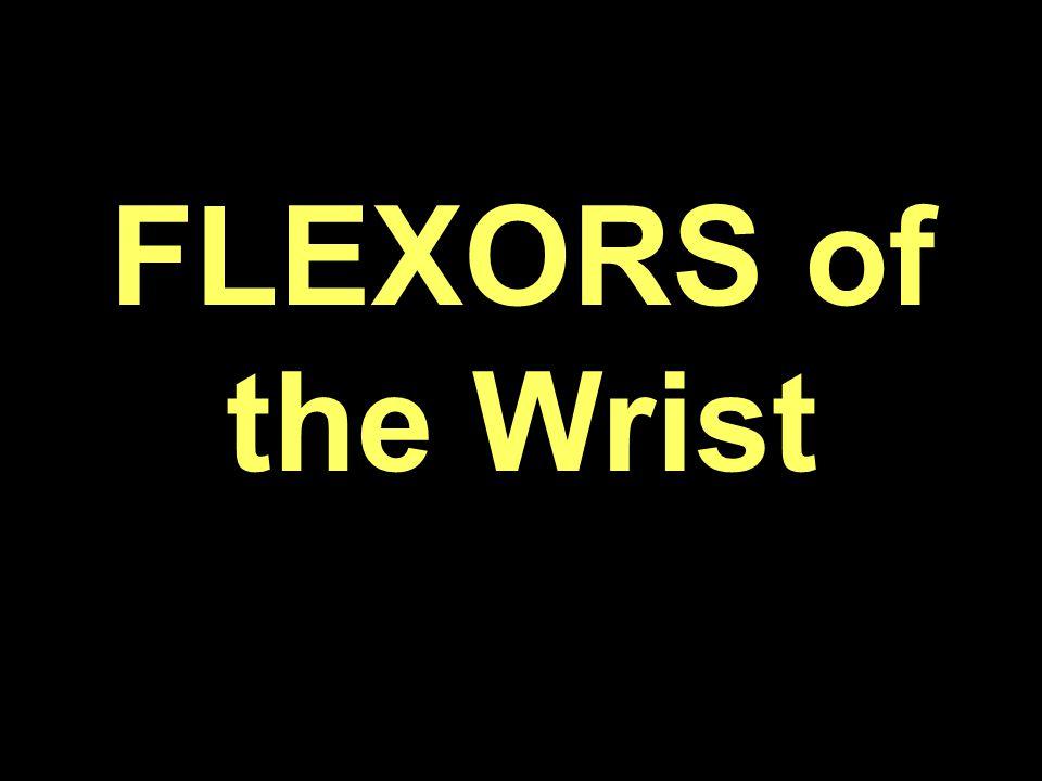 FLEXORS of the Wrist