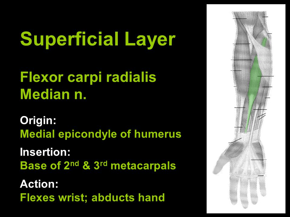 Superficial Layer Palmaris longus Median n.