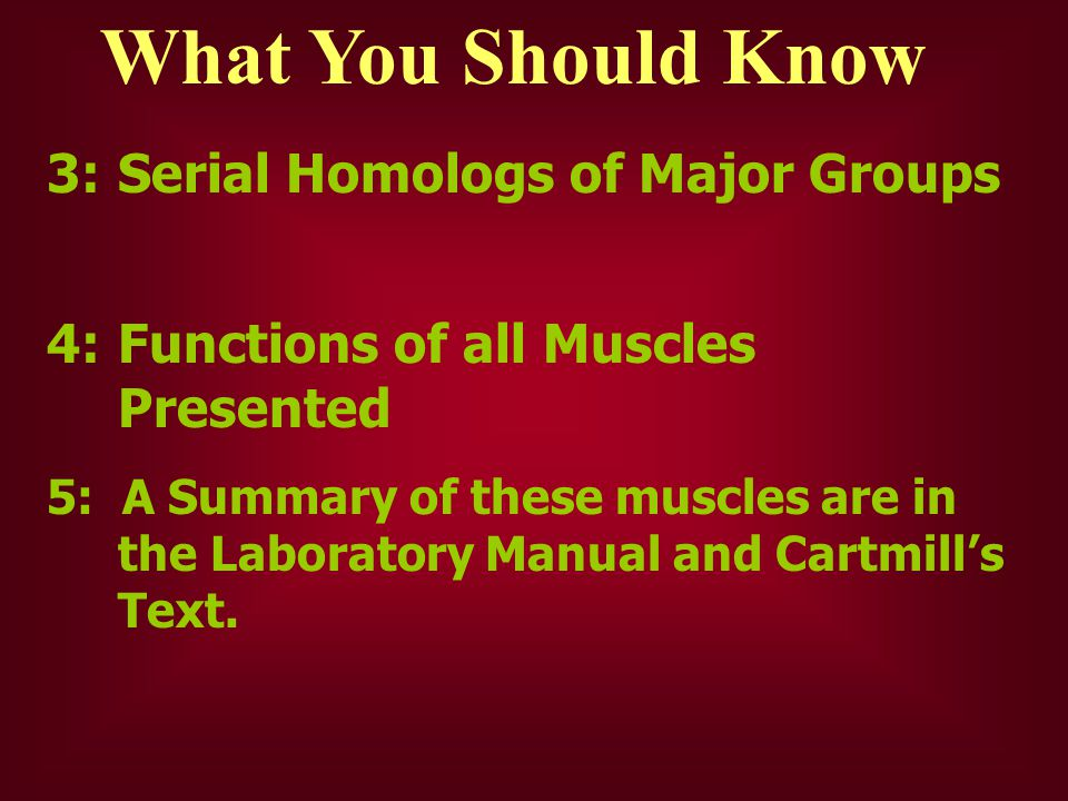 What You Should Know 3:Serial Homologs of Major Groups 4:Functions of all Muscles Presented 5: A Summary of these muscles are in the Laboratory Manual
