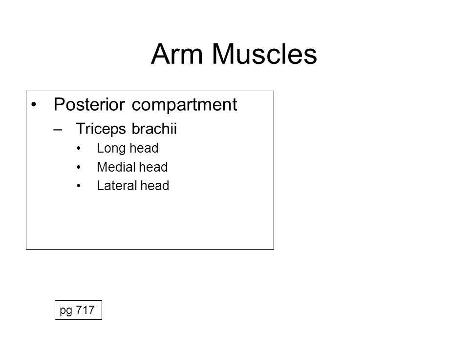 Muscles of Arm MuscleOriginInsertionActionInnerv Anterior BrachialisAnt shaft, distal humerusCoronoid process /ulnar tuberosity (ulna) Flex forearm Musculo- cutaneous Biceps BrachiiLong: supraglenoid tubercle (scapula) Short: coracoid proc (scapula) Radial Tuberosity (radius) Flex forearm, Supination Musculo- cutaneous CoracobrachialisCoracoid proc (scapula)Medial surface midshaft (humerus) Flex arm, Adduct arm Musculo- cutaneous Posterior Triceps BrachiiLong: Infraglenoid tubercle (scapula) Medial: Posterior Shaft (middle humerus) Lateral: Posterior Shaft (proximal humerus) Common tendon to olecranon (ulna) Extend forearm Radial