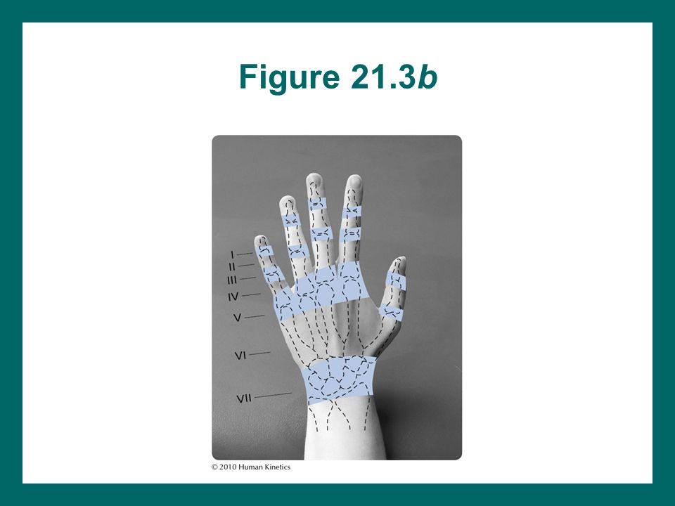 Figure 21.3b
