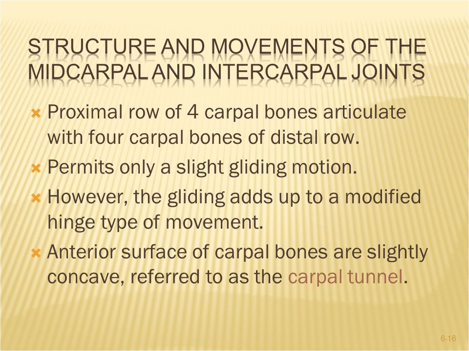 6-16  Proximal row of 4 carpal bones articulate with four carpal bones of distal row.  Permits only a slight gliding motion.  However, the gliding