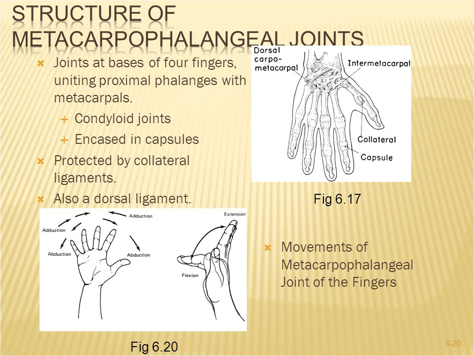 6-20  Joints at bases of four fingers, uniting proximal phalanges with metacarpals.  Condyloid joints  Encased in capsules  Protected by collatera