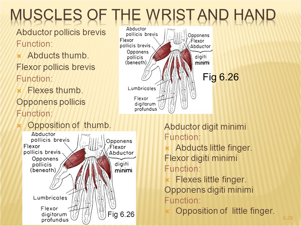 6-29 Abductor digit minimi Function:  Abducts little finger. Flexor digiti minimi Function:  Flexes little finger. Opponens digiti minimi Function: