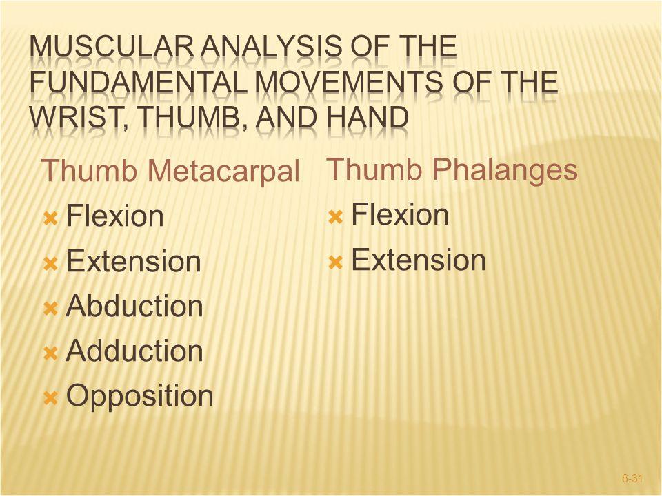 6-31 Thumb Metacarpal  Flexion  Extension  Abduction  Adduction  Opposition Thumb Phalanges  Flexion  Extension