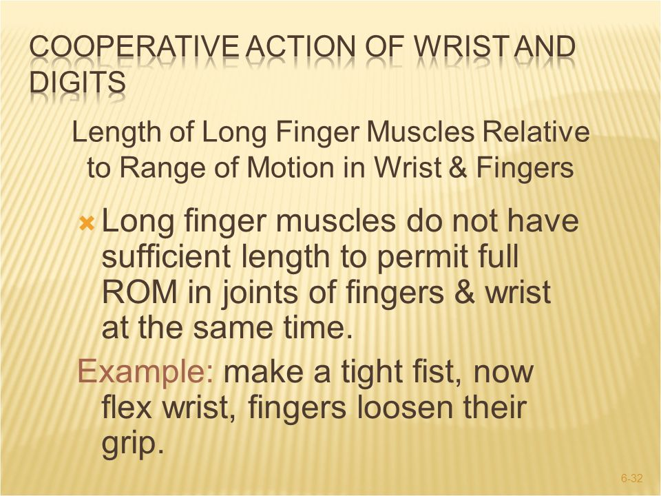 6-32  Long finger muscles do not have sufficient length to permit full ROM in joints of fingers & wrist at the same time. Example: make a tight fist,