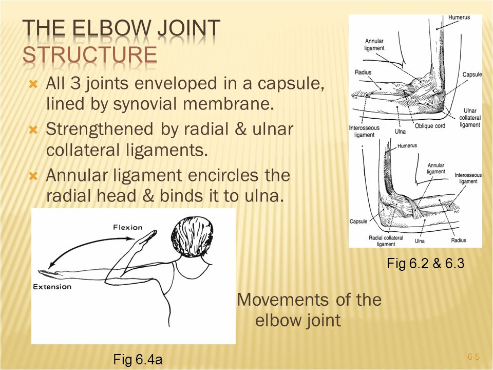 6-5  All 3 joints enveloped in a capsule, lined by synovial membrane.  Strengthened by radial & ulnar collateral ligaments.  Annular ligament encir