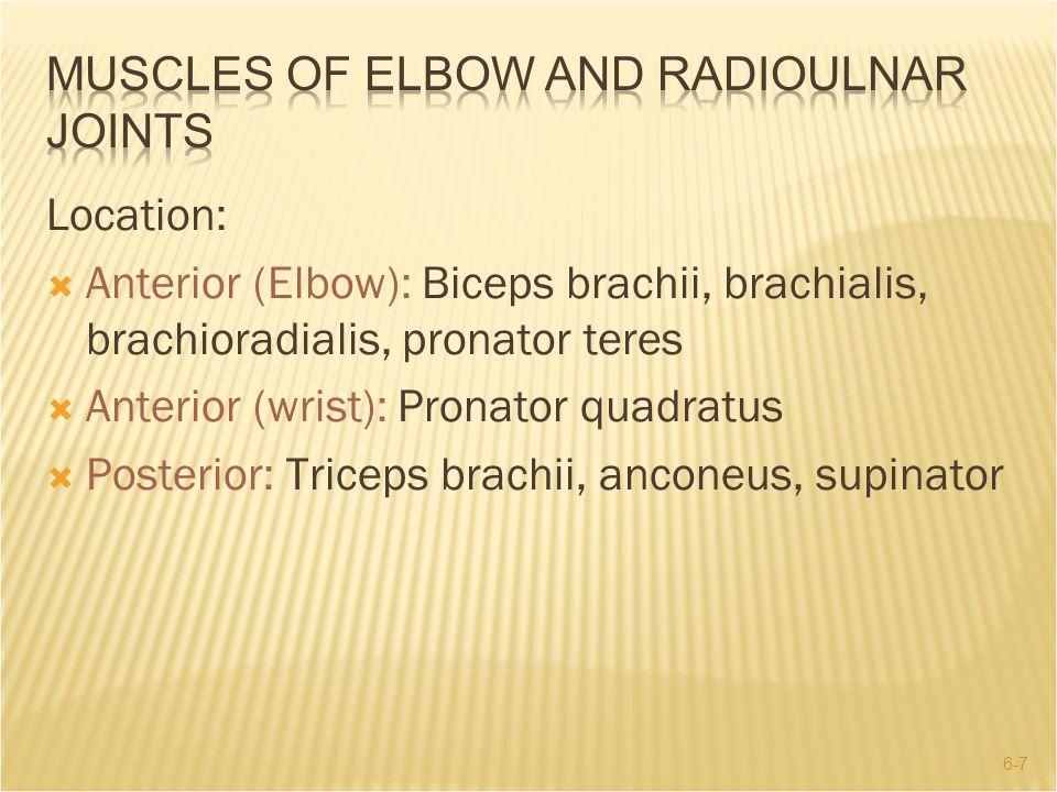 6-7 Location:  Anterior (Elbow): Biceps brachii, brachialis, brachioradialis, pronator teres  Anterior (wrist): Pronator quadratus  Posterior: Tric
