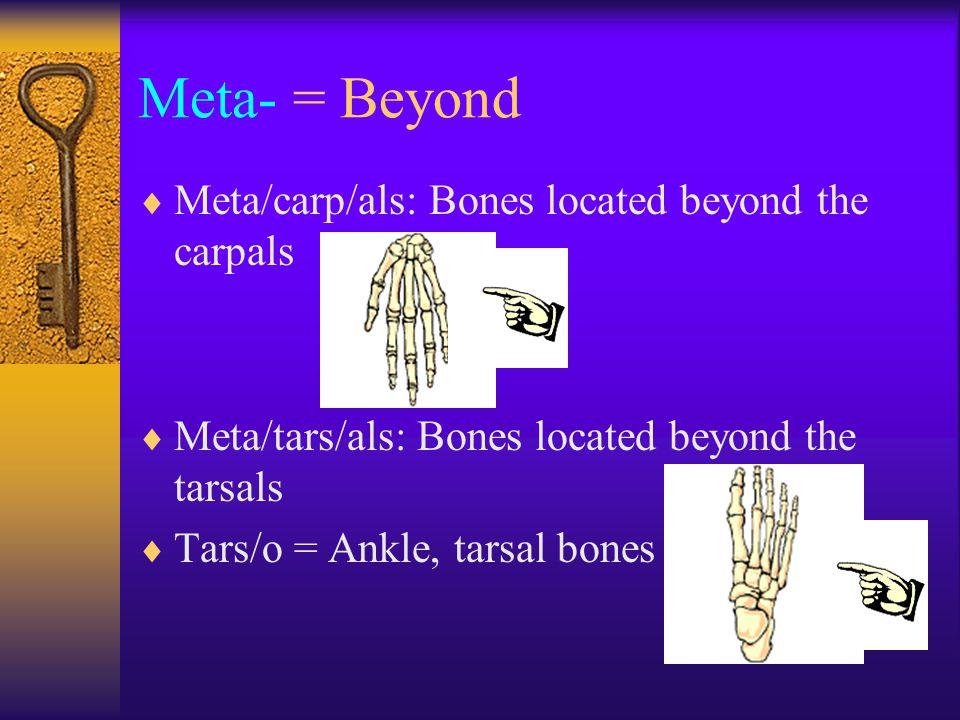 Meta- = Beyond  Meta/carp/als: Bones located beyond the carpals  Meta/tars/als: Bones located beyond the tarsals  Tars/o = Ankle, tarsal bones