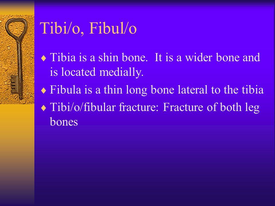 Tibi/o, Fibul/o  Tibia is a shin bone. It is a wider bone and is located medially.