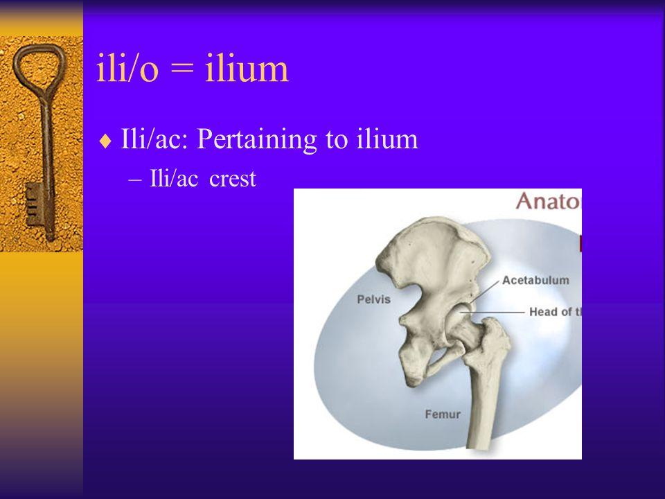 ili/o = ilium  Ili/ac: Pertaining to ilium –Ili/ac crest