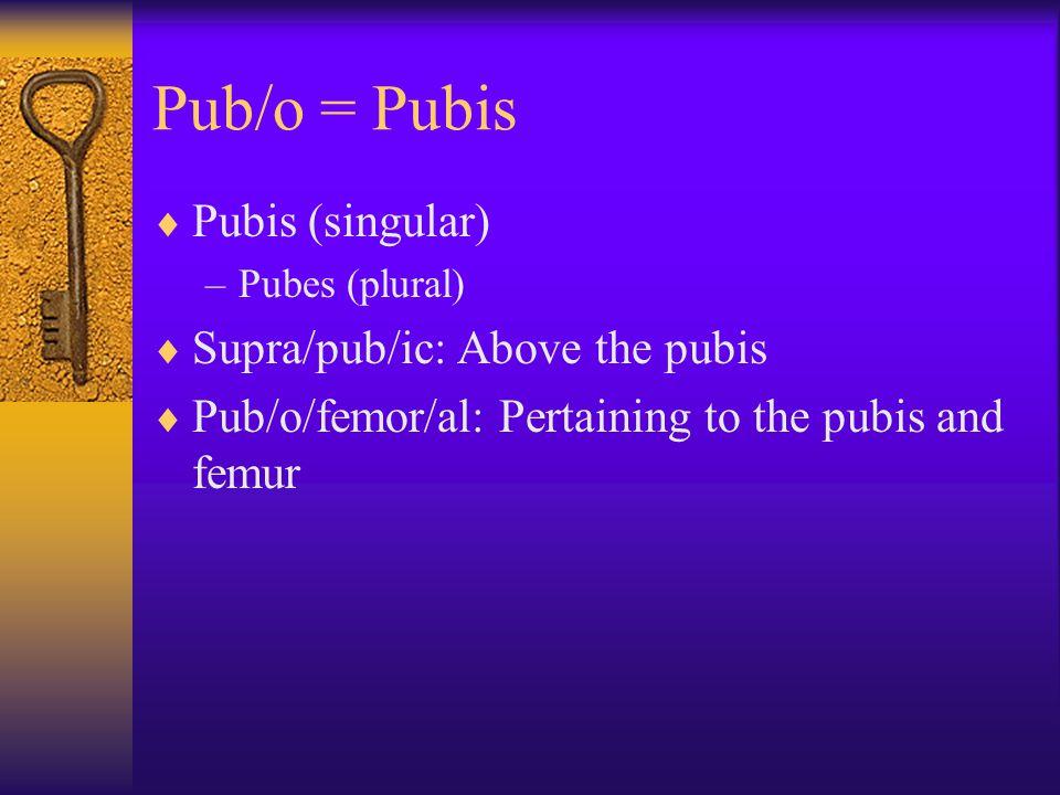 Pub/o = Pubis  Pubis (singular) –Pubes (plural)  Supra/pub/ic: Above the pubis  Pub/o/femor/al: Pertaining to the pubis and femur