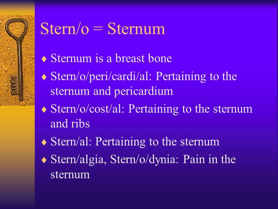 Stern/o = Sternum  Sternum is a breast bone  Stern/o/peri/cardi/al: Pertaining to the sternum and pericardium  Stern/o/cost/al: Pertaining to the sternum and ribs  Stern/al: Pertaining to the sternum  Stern/algia, Stern/o/dynia: Pain in the sternum