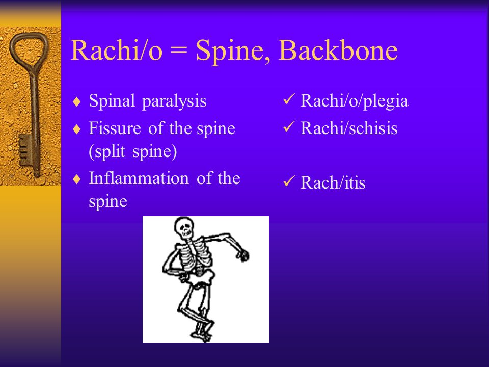 Rachi/o = Spine, Backbone  Spinal paralysis  Fissure of the spine (split spine)  Inflammation of the spine Rachi/o/plegia Rachi/schisis Rach/itis