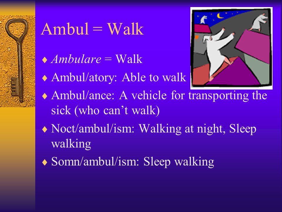 Ambul = Walk  Ambulare = Walk  Ambul/atory: Able to walk  Ambul/ance: A vehicle for transporting the sick (who can't walk)  Noct/ambul/ism: Walking at night, Sleep walking  Somn/ambul/ism: Sleep walking
