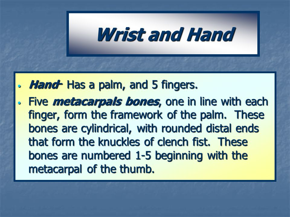 Wrist and Hand Hand - Has a palm, and 5 fingers. Hand - Has a palm, and 5 fingers. Five metacarpals bones, one in line with each finger, form the fram