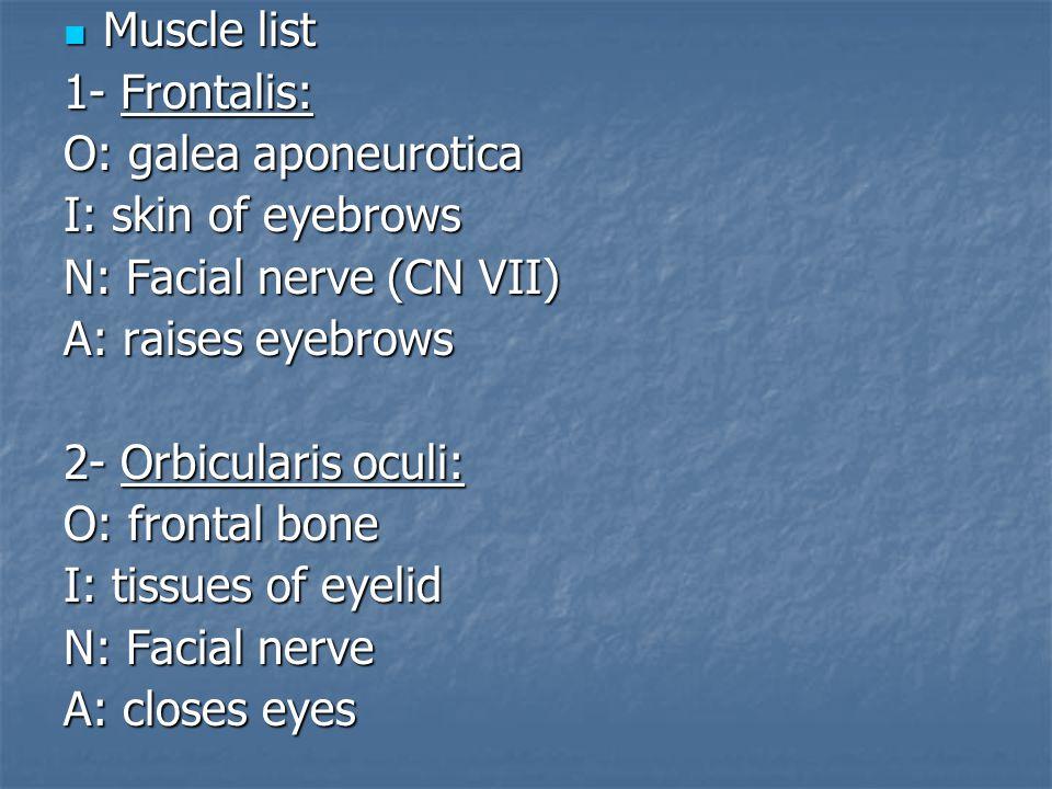 Muscle list Muscle list 1- Frontalis: O: galea aponeurotica I: skin of eyebrows N: Facial nerve (CN VII) A: raises eyebrows 2- Orbicularis oculi: O: f