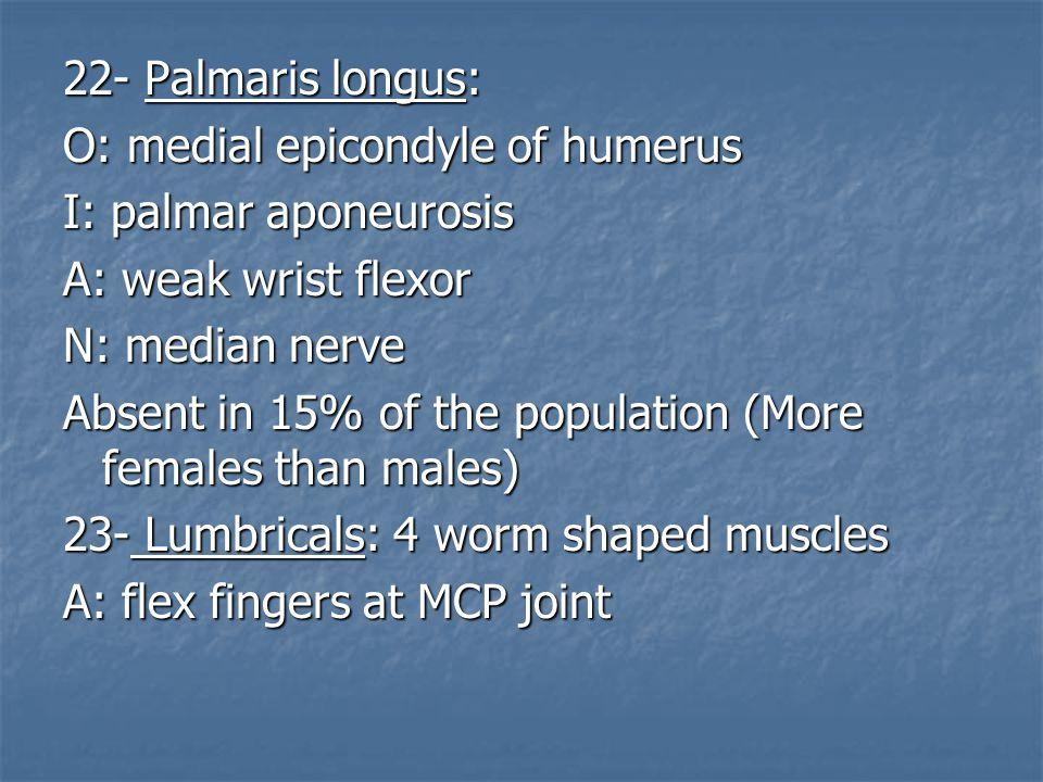 22- Palmaris longus: O: medial epicondyle of humerus I: palmar aponeurosis A: weak wrist flexor N: median nerve Absent in 15% of the population (More