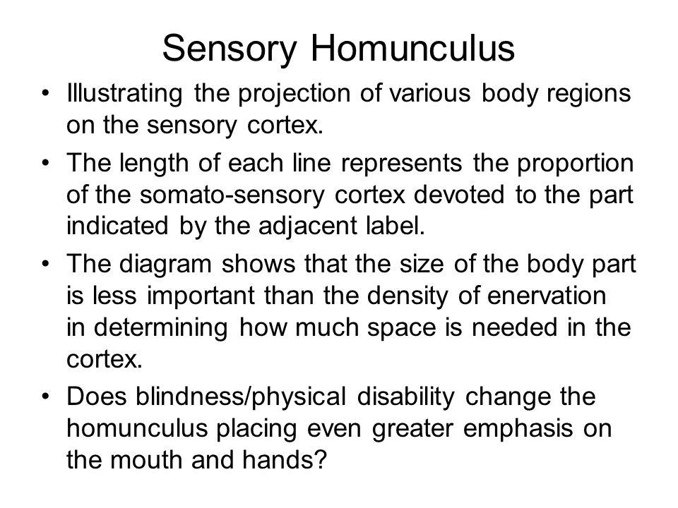 Sensory Homunculus Illustrating the projection of various body regions on the sensory cortex.