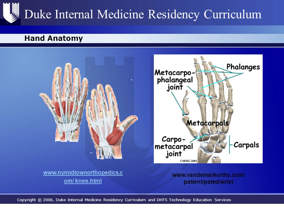 Copyright © 2006, Duke Internal Medicine Residency Curriculum and DHTS Technology Education Services Duke Internal Medicine Residency Curriculum Hand Anatomy www.vandemarkortho.com/ patient/pated/wrist www.nymidtownorthopedics.c om/ knee.html