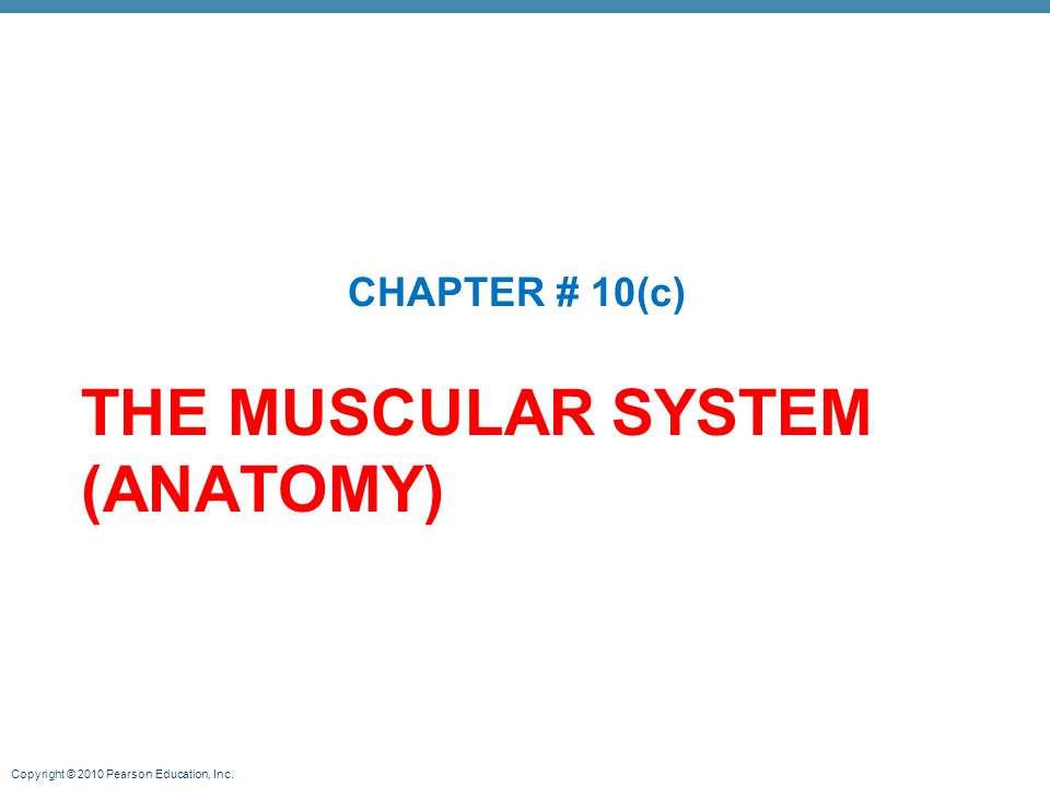 Copyright © 2010 Pearson Education, Inc. THE MUSCULAR SYSTEM (ANATOMY) CHAPTER # 10(c)