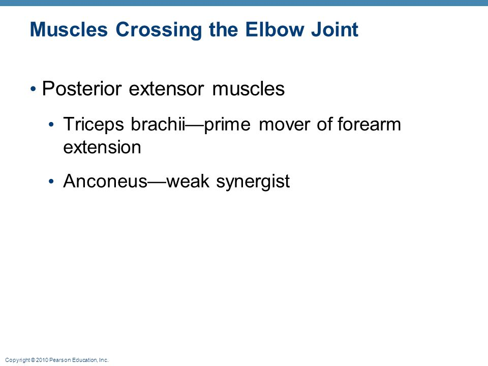 Copyright © 2010 Pearson Education, Inc. Muscles Crossing the Elbow Joint Posterior extensor muscles Triceps brachii—prime mover of forearm extension