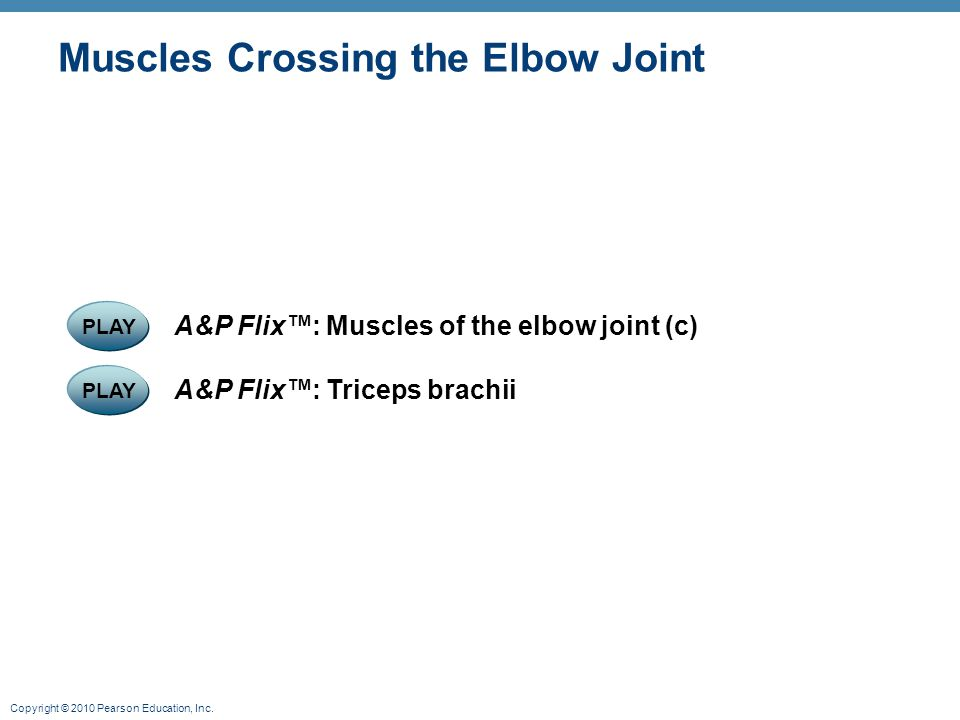 Copyright © 2010 Pearson Education, Inc. Muscles Crossing the Elbow Joint PLAY A&P Flix™: Triceps brachii PLAY A&P Flix™: Muscles of the elbow joint (