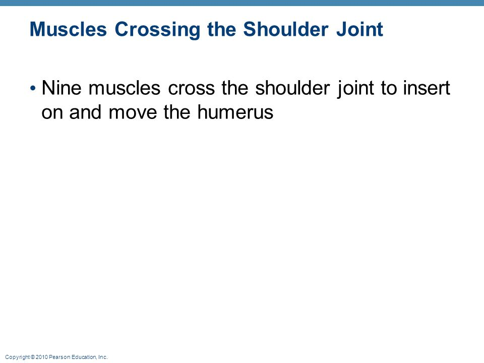 Copyright © 2010 Pearson Education, Inc. Muscles Crossing the Shoulder Joint Nine muscles cross the shoulder joint to insert on and move the humerus